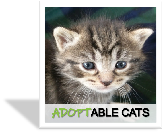 Adoptable Cats for rescue
