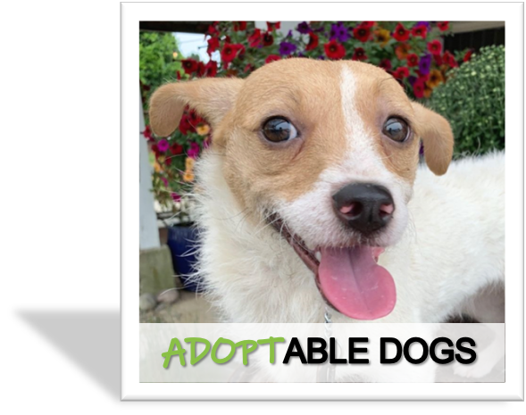 Adoptable Dogs for Rescue