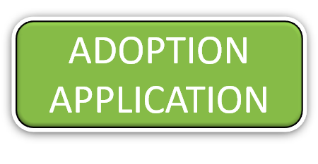 cat adoption, dog adoption, kitten adoption, puppy adoption
