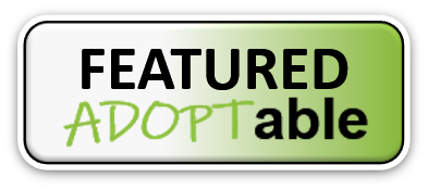 Featured Adoptable